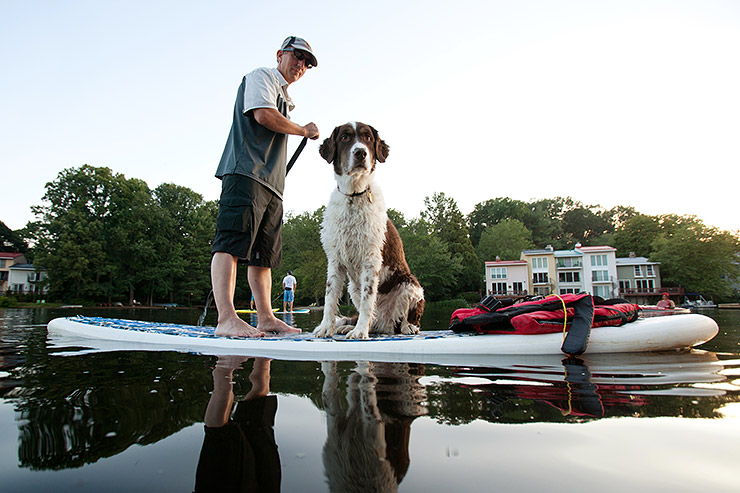 Dog on paddle board with Surf Reston in Reston, Virginia