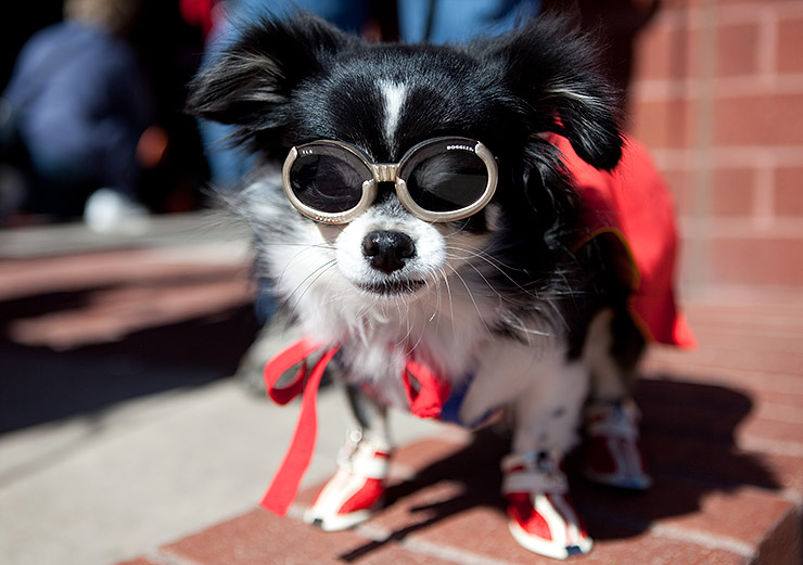 coming up dog events in northern virginia - Halloween Northern Virginia