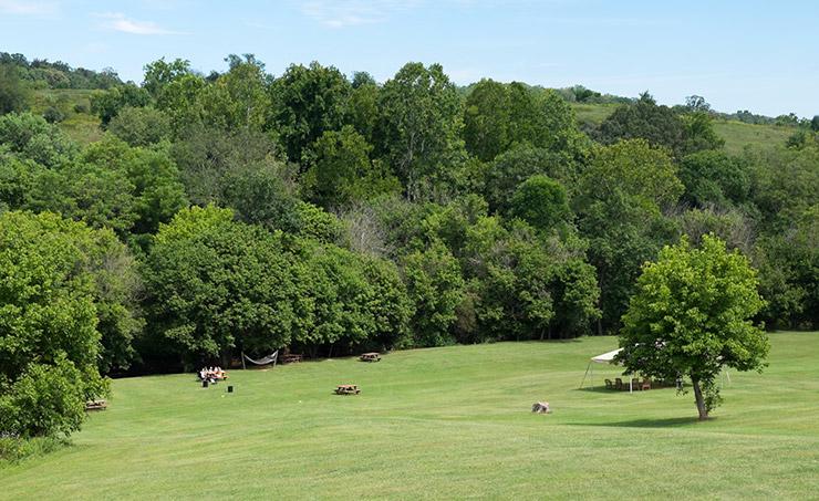 Three-Fox-Vineyards-meadow