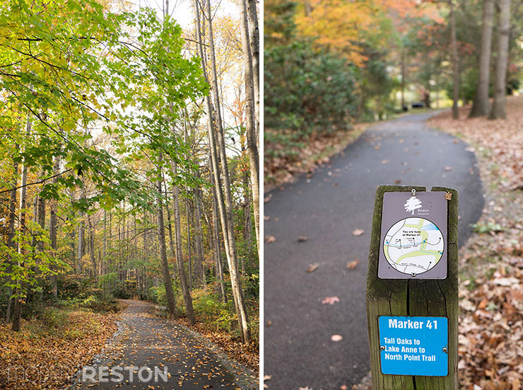 Lake-Newport-Reston-Virginia-trail-04