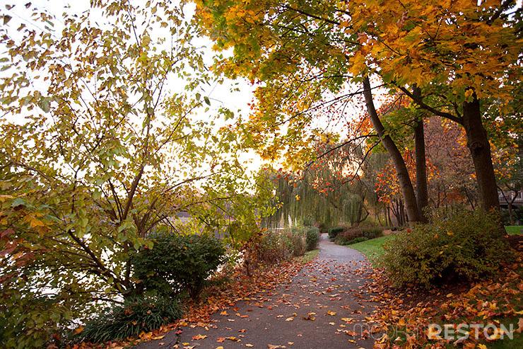Lake-Newport-Reston-Virginia-trail-11