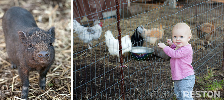 Reston-Farm-Market-animals