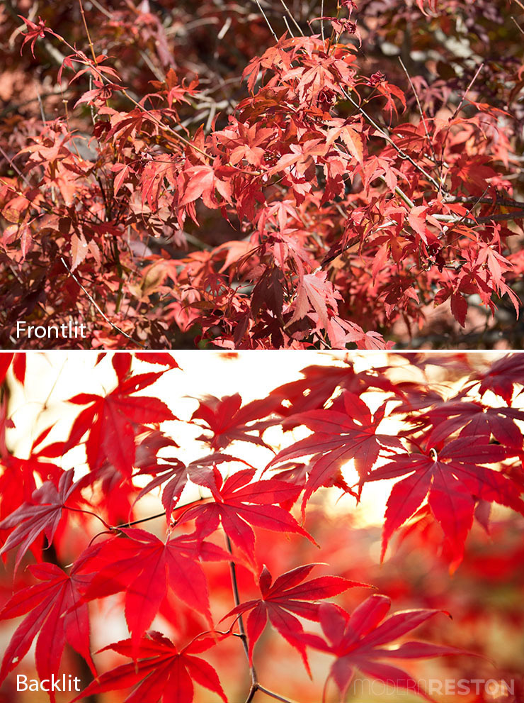 tips-for-fall-photos-07-backlighting-comparison