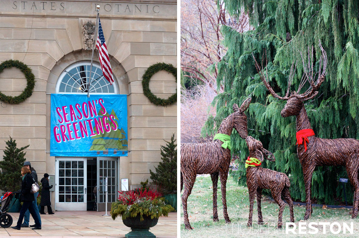 Two dc area botanic gardens two very different holiday displays for Botanical gardens dc christmas