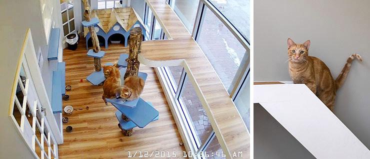 Just Cats Clinic Reston VA