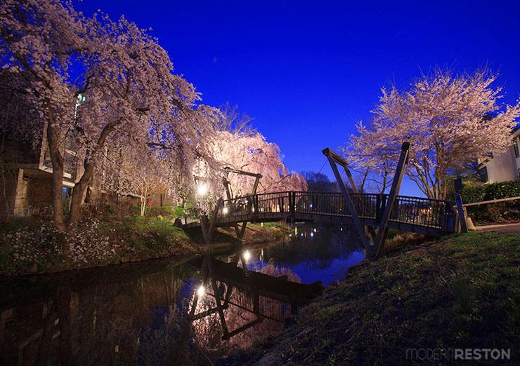 Lake-Anne-bridge-cherry-blossoms