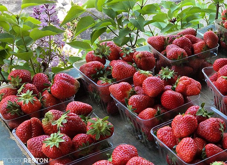 Reston-farmers-market-strawberries