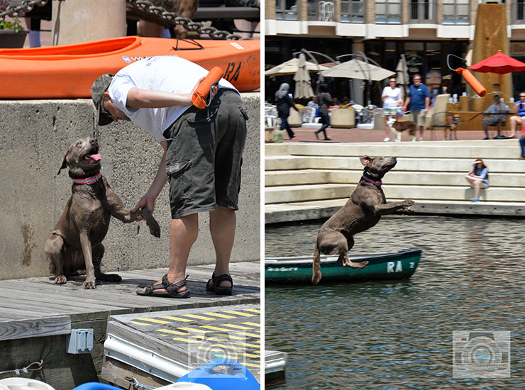 Lake-Anne-dock-diving-dogs-02