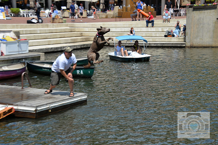 Lake-Anne-dock-diving-dogs-03