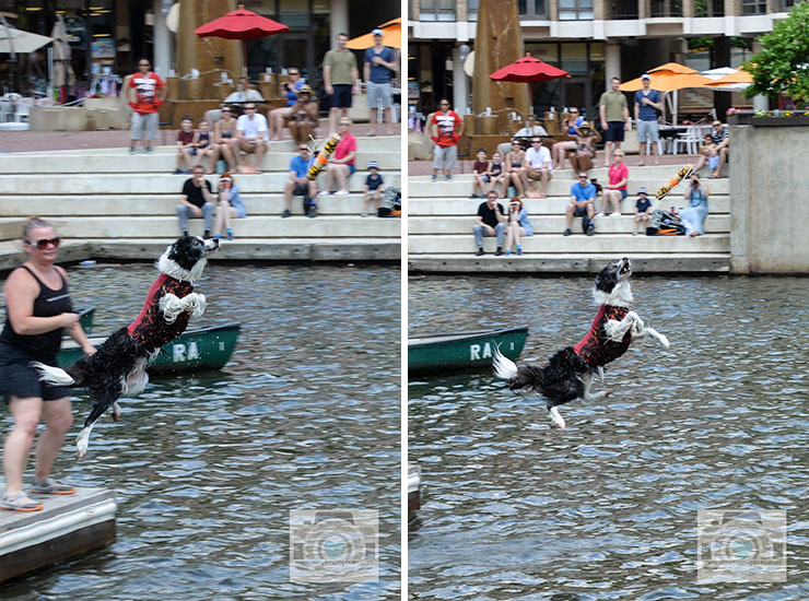 Lake-Anne-dock-diving-dogs-05