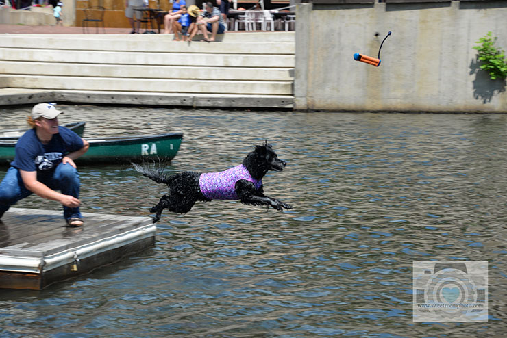 Lake-Anne-dock-diving-dogs-08