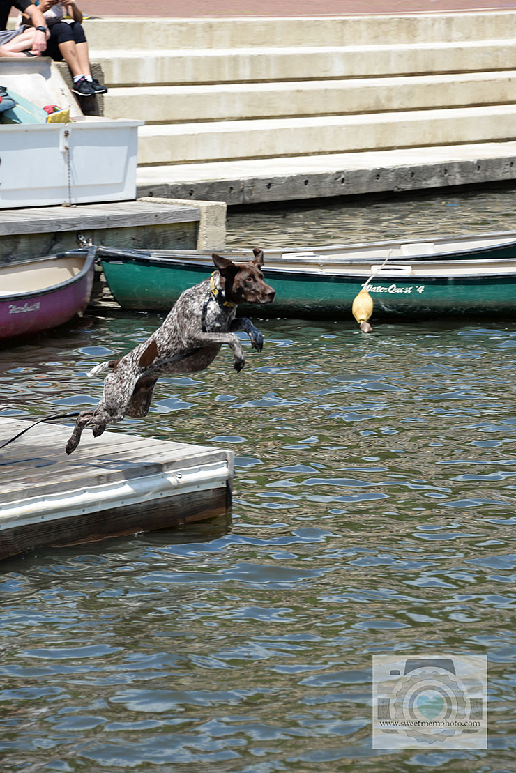 Lake-Anne-dock-diving-dogs-09
