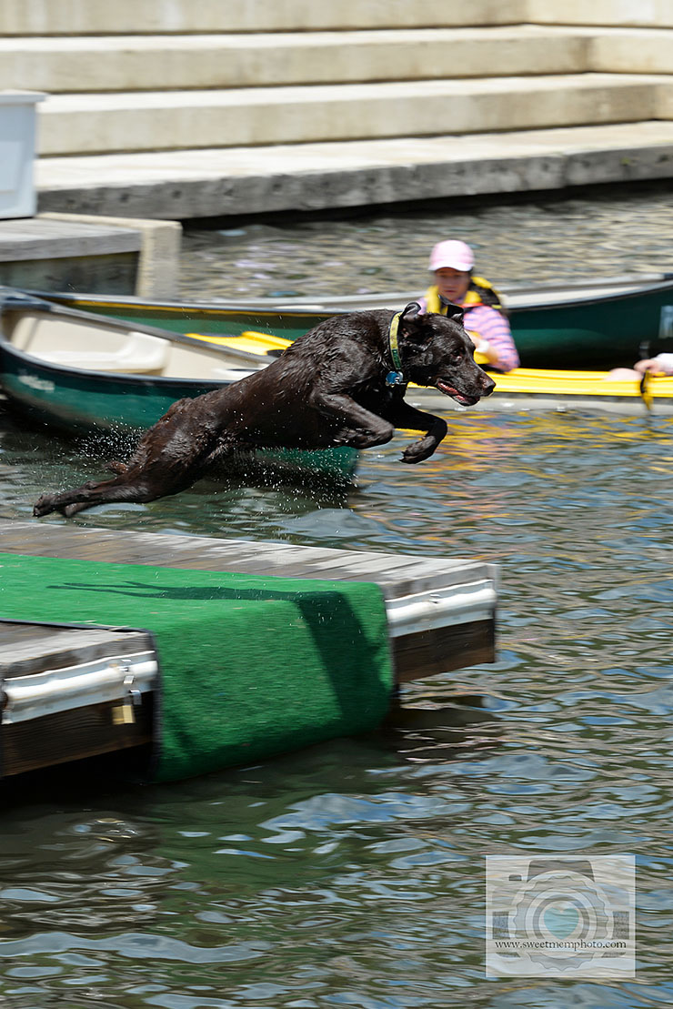 Lake-Anne-dock-diving-dogs-11