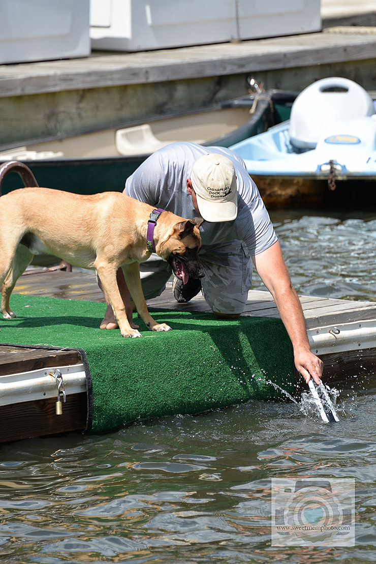 Lake-Anne-dock-diving-dogs-12