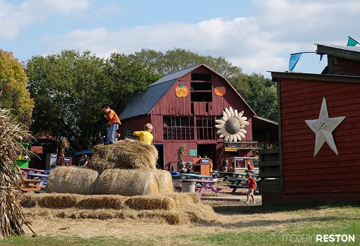 Cox-Farms-Fall-Festival-3