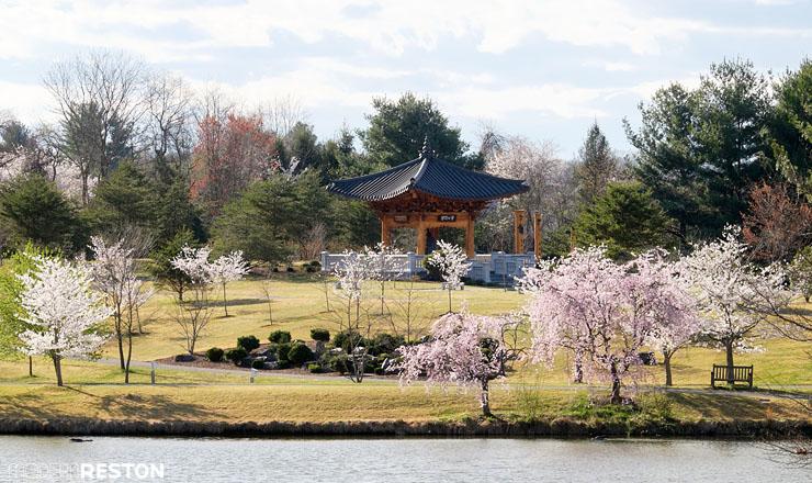 Meadowlark-Gardens-cherry-blossoms-09