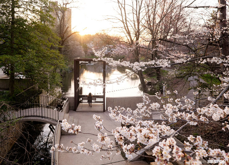 Reston-springtime-01