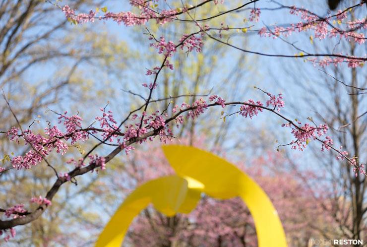 Reston-springtime-02