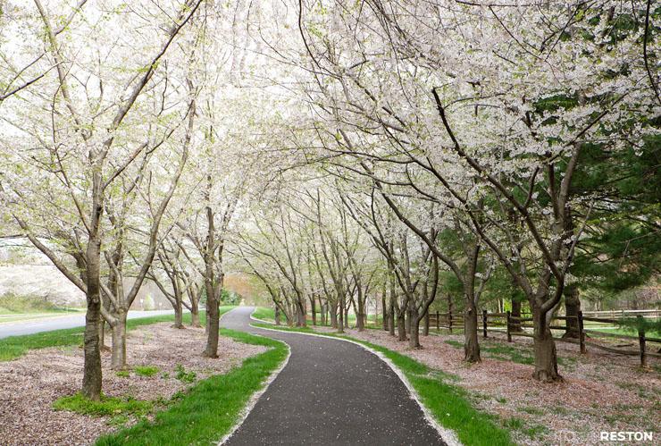 Reston-springtime-05