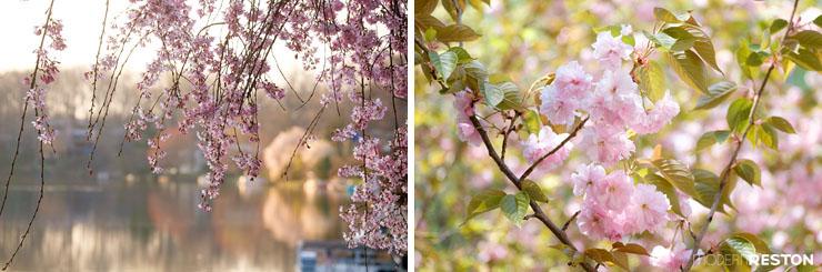 Reston-springtime-07