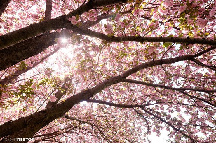 Reston-springtime-09