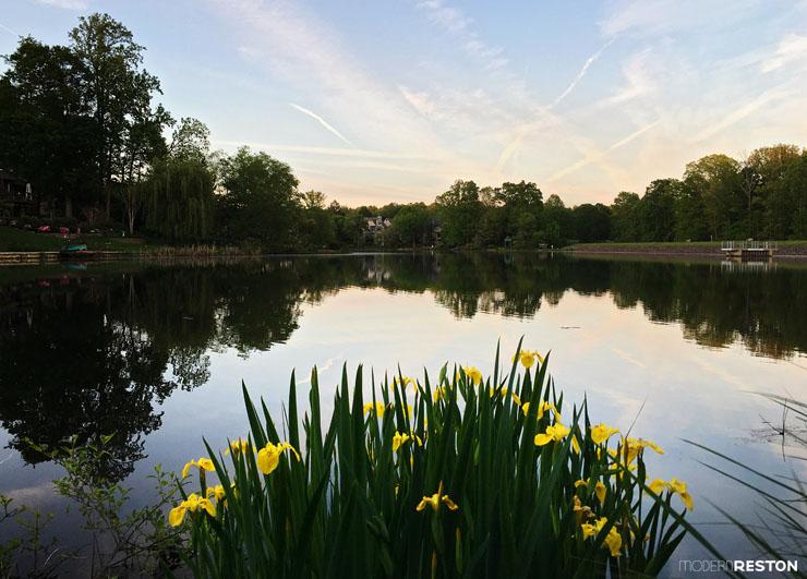 Reston-springtime-14