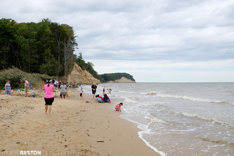 You Can Find Fossils on the Beaches of Calvert Cliffs State Park