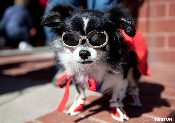 fall-dog-events-in-northern-virginia-001