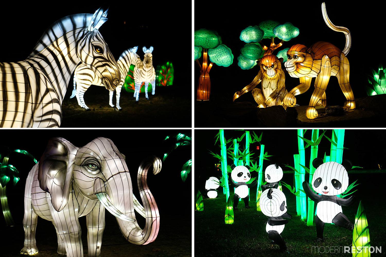 chinese-lantern-festival-roers-zoofari-reston-05
