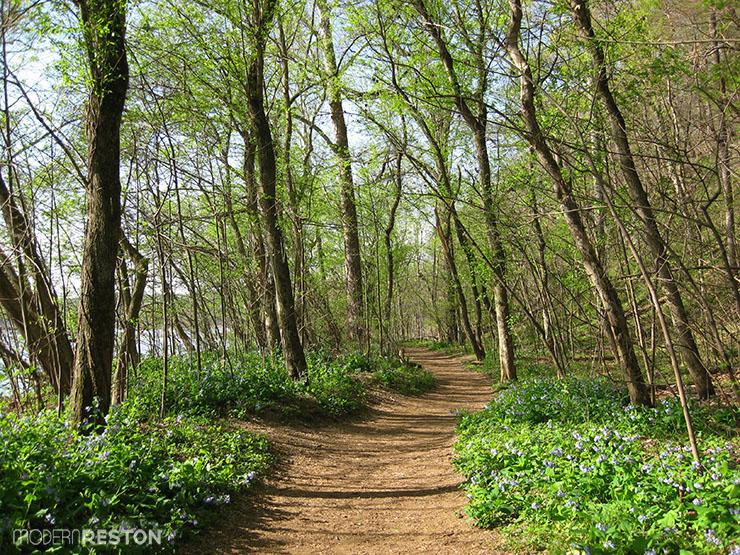 Riverbend-Park-bluebells-04