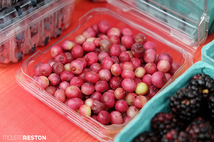 Reston-Farmers-Market-pink-blueberries