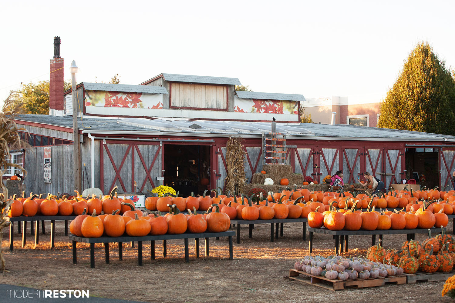 reston farm market - Halloween Northern Virginia