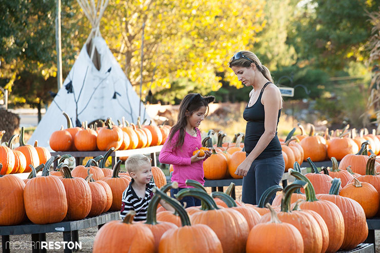 halloween 2015 events in the reston area of northern virginia - Halloween Events In Va