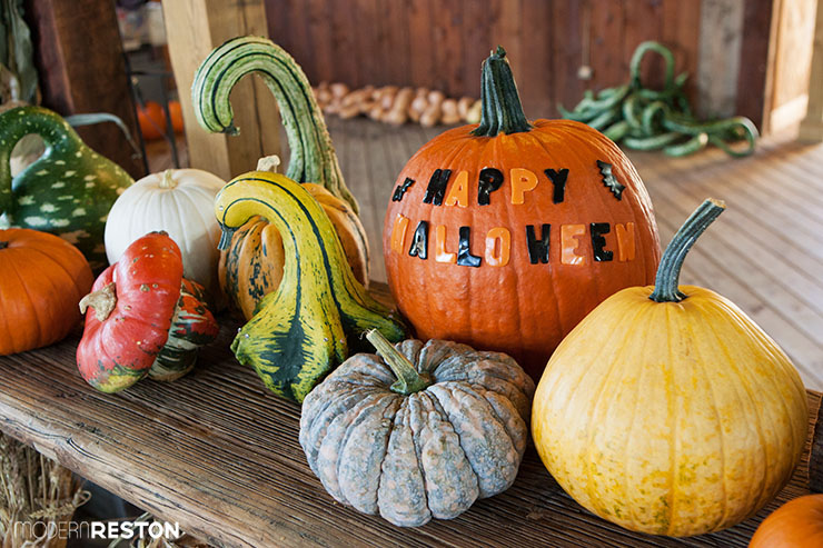 Reston-Halloween-pumpkins